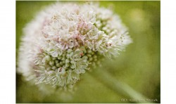 Ever So Softly ©2011 Jessica Rogers Photography