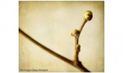 Mulberry 1 ©2011 Jessica Rogers Photography
