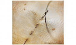 Needle and Thread ©2011 Jessica Rogers Photography