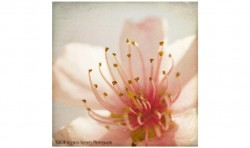 Spring Whispers 3 ©2011 Jessica Rogers Photography