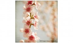 Spring Whispers 4 ©2011 Jessica Rogers Photography