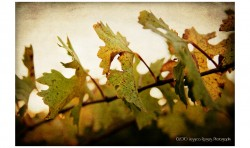 Sunset Vine ©2010 Jessica Rogers Photography